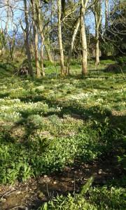 Woodland slopes in spring